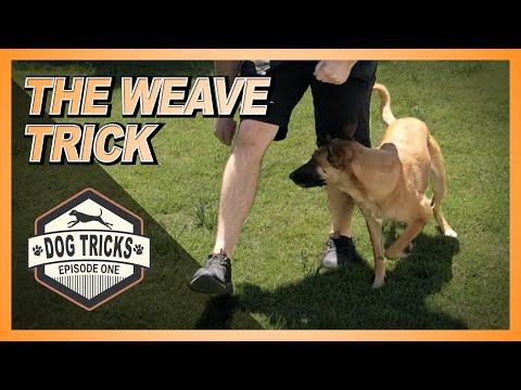 Teach Your Dog the Leg Weave Trick! TRICK SERIES!