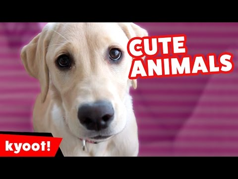 The Funniest Farm Animals & Pets Home Video Bloopers of 2016 Weekly Compilation | Kyoot Animals