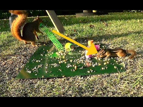 """Squirrel """"SHOOTS"""" a slinky at Chipmunk"""