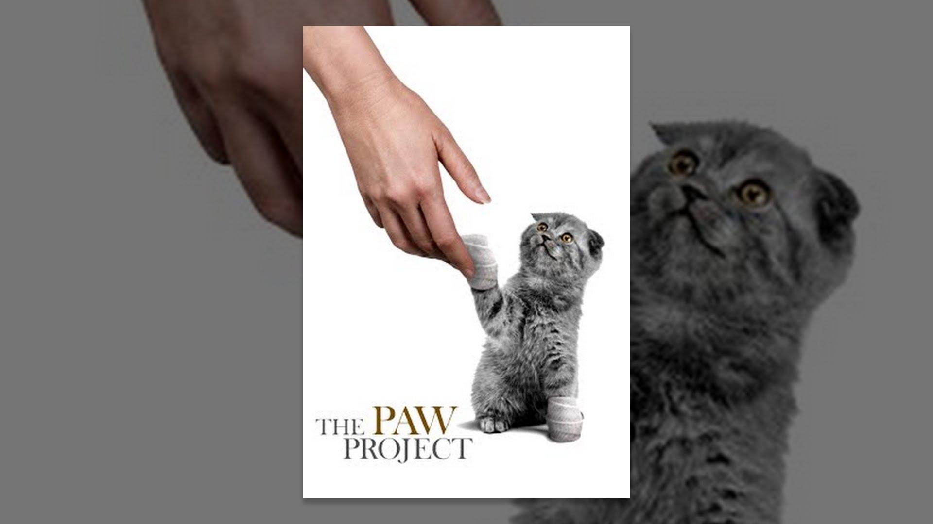 Cat & Pet Resources - Furry Friends