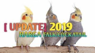 [UPDATE] HARGA FALK/COCKATAIL 2019| Tompel(Grey,Pearl,cinnamon), Lutino, Whiteface, Albino