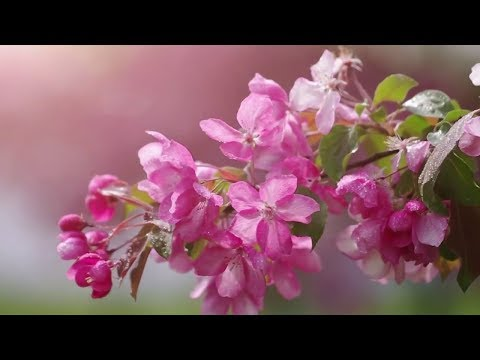 Relaxing Music for Stress Relief. Soothing Music for Meditation, Healing Therapy, Study, Sleep, Yog