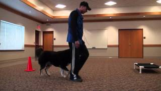Bailey (tibetan Mastiff) Boot Camp Level Iii. Dog Training Minnesota