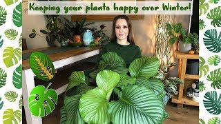 Keeping Your House Plants Happy Over Winter | Overwintering Tropical Garden Plants!