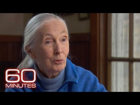 'Jane Goodall: The Hope' | How to watch, live stream, TV channel, time