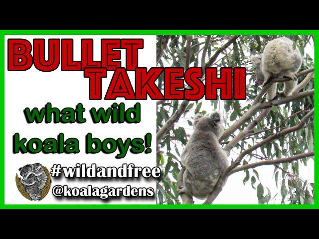 Koala Bullet - wow teenagers are wild koala boys!