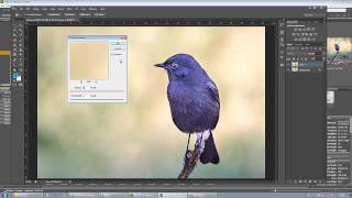 bird photography using raw files
