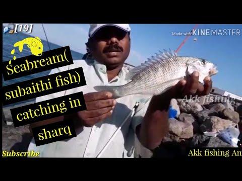 Sharq Fish Market In Kuwait/big SUBAYITHY Sea Bream Fishing/ AKK Fishing Anil