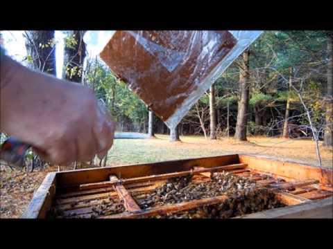 Honey Bee Hive Winter Wrap up