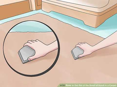 How to Get Rid of the Smell of Vomit in a Carpet