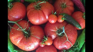 7 handy Tips - GROWING TOMATOES - this week @ southern california gardening