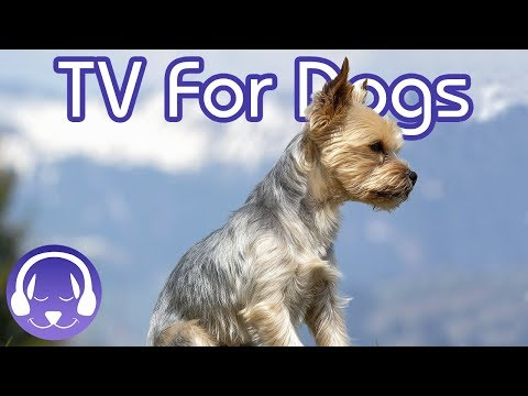 Entertaining TV For Dogs: Stimulate Your Dog! (NEW)
