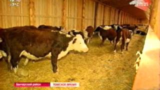 В селе Бакчар построена семейная ферма на 200 голов коров породы герефорд(, 2015-12-17T03:25:39.000Z)