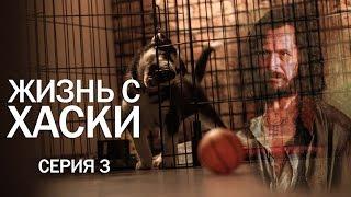 Жизнь с Хаски (серия 3)