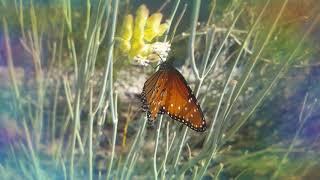 Trippy Nature Science in AZ ASMR