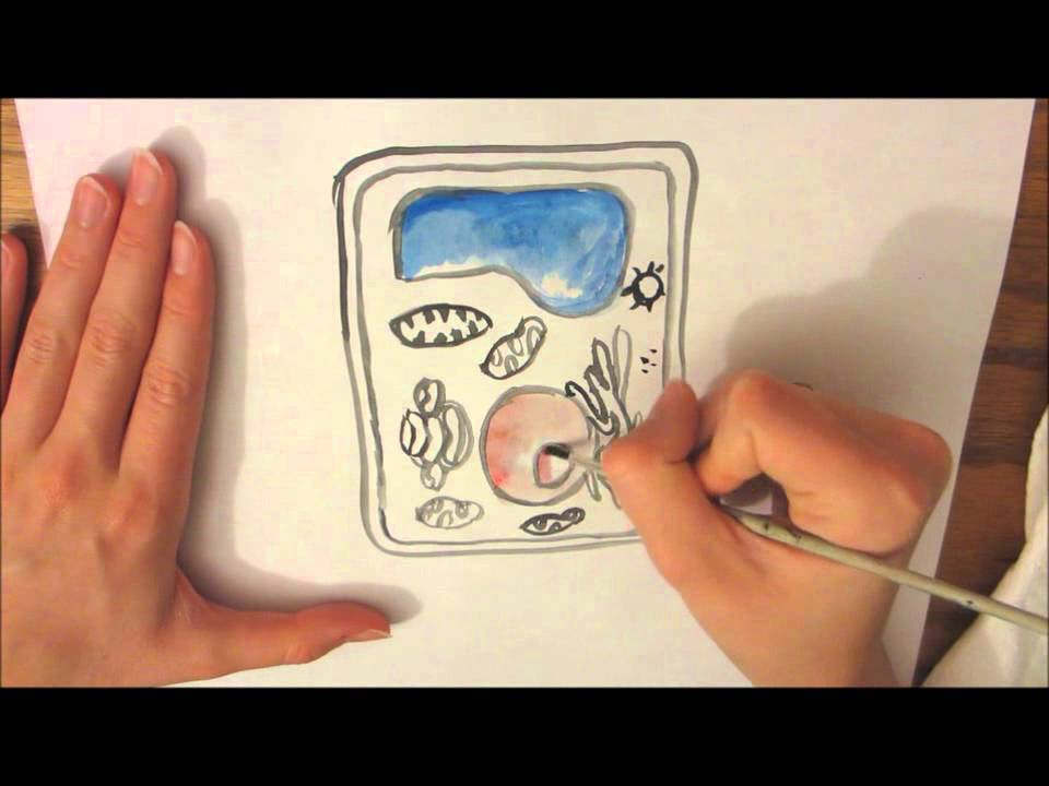 a plant cell drawing youtube