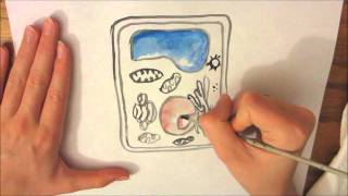a plant cell drawing