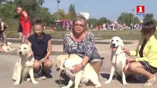 Выставка собак КСПС КУПА 2017 г Крым
