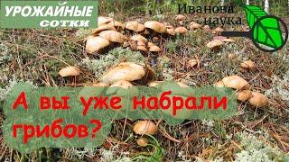 НЕ ВЫБРАСЫВАЙТЕ Как использовать грибные очистки грибной компост и отработанный мицелий