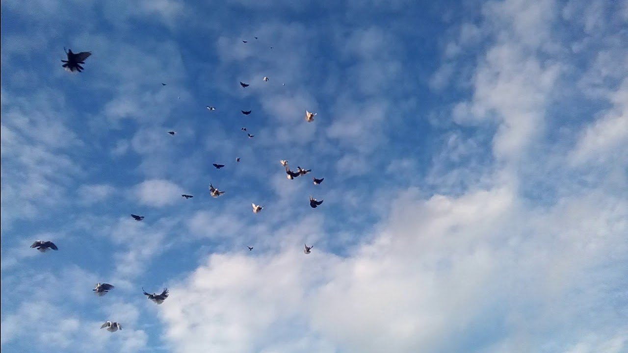 очаровательных николаевские голуби ютуб вот, решив