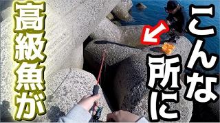 【穴釣り】テトラポットの隙間に高級魚が潜んでる! thumbnail