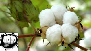 Top 10 Cotton Producing States In India 2015-16