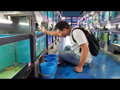 LIOW VIDEO: At QianHu Fish Farm (Part 2/2) 仟湖鱼场买观赏鱼