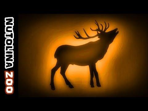 Deer sounds / Deer noises / Animal sounds deer