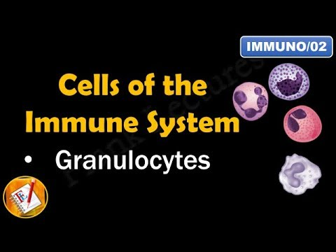 Cells of the Immune System (PART I - GRANULOCYTES) (FL-Immuno/02)