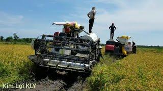 Ám ảnh của những anh em chạy máy cắt lúa là đây,25 công đất bị lầy 6 lần.