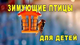 Зимующие птицы. Обучающее видео для малышей [Детям TV]