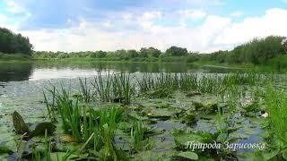 Лето. Река. Природа, пение птиц, звуки природы, птицы поют. Вода, релакс, медитация.