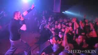 Section 8 - Reunion Live January 18th, 2014