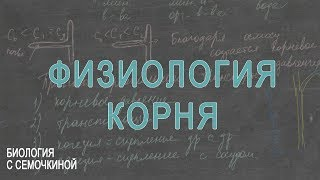 Физиология корня