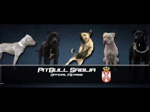 Pit Bull Serbia/Srbija [By AdolF]