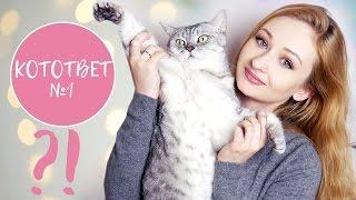видео Абиссинская кошка: Вопросы-ответы