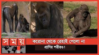 ভয়াবহতা ছড়িয়ে পড়ছে পশু-পাখি ও প্রাণিকূলেও! | Animal Corona | Somoy TV