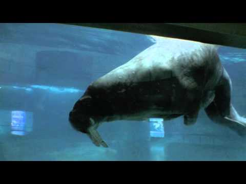 Oceanographic Underwater Museum (Aquarium) at Spain / Valencia (HD)