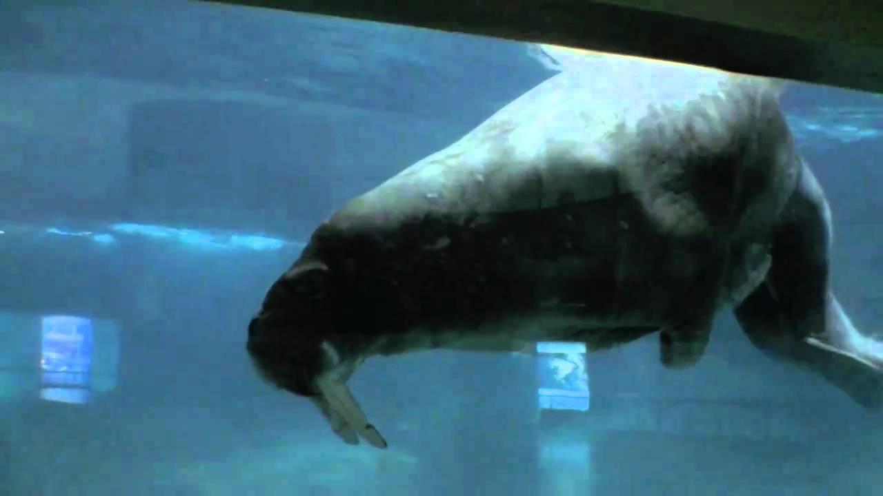 Oceanographic underwater museum aquarium at spain for Spain underwater museum
