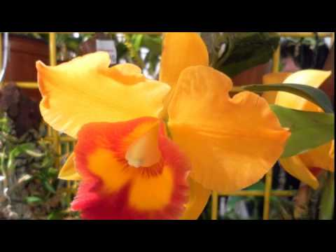 orchideen pflege 10 krasse irrt mer bei der pflege von orchideen youtube. Black Bedroom Furniture Sets. Home Design Ideas