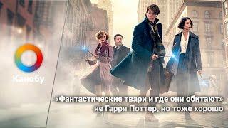 «Фантастические твари и где они обитают»: не Гарри Поттер, но тоже хорошо