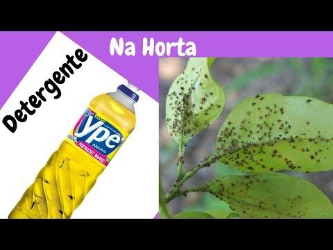 Detergente, acaba com pulgão, cochonilha, fungos e muitas outras pragas da sua horta
