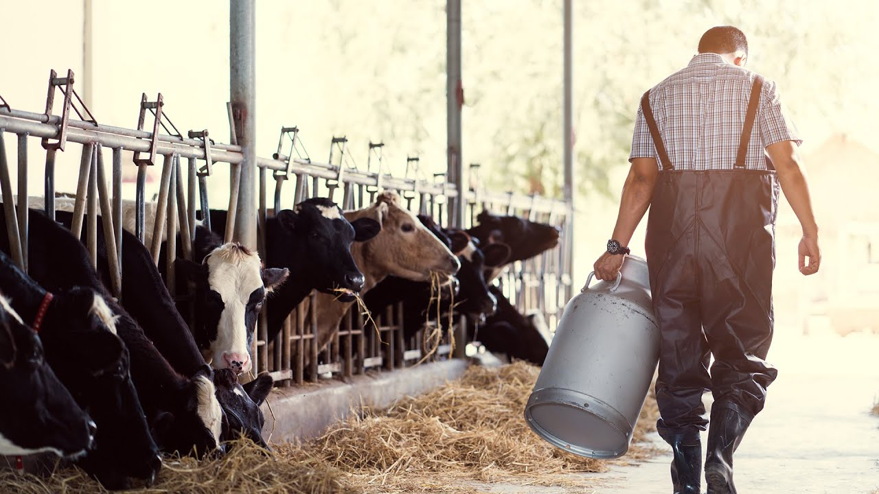 5 Times Dairy Farmers Went Vegan