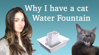 DO YOU NEED A CAT FOUNTAIN?! Why we needed to get one for our cats