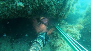 Весенний горбыль 100 подводная охота