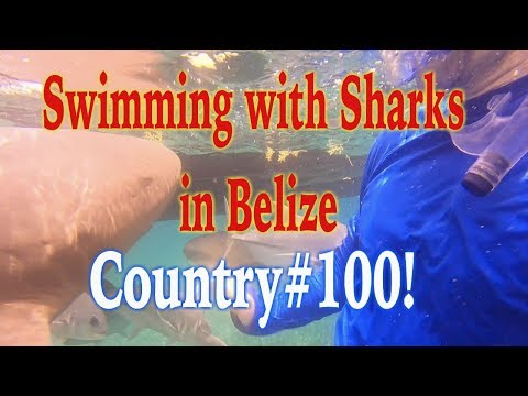 Swimming with Sharks in Belize! Travel to Belize