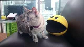"""Пиксели"" атаковали Nala Cat!"