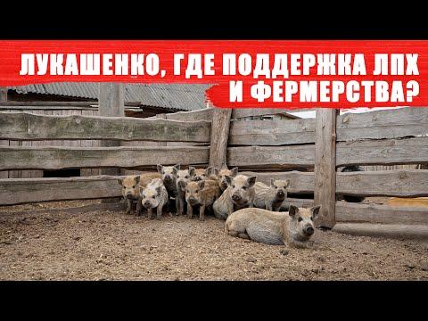 Лукашенко, где поддержка ЛПХ и фермерства?
