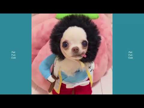 Top Cute Highlights of CATS Dogs Vine #66 – Funny Cat & Dog
