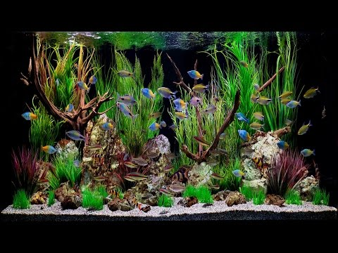 Fish Tank Artis Amsterdam☺HD♫☊ - Really Nice Aquarium
